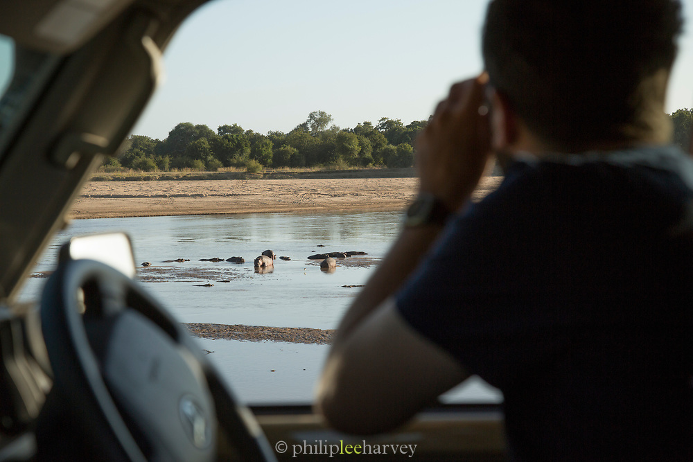 Tourist observing hippopotamus on pond from car, South Luangwa National Park Nsefu Sector, Zambia