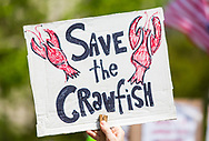 Woman with a save the crawfish sign at a Metairie Indivisible protest in front of Senator Cassidy's office in Metairie, LA.