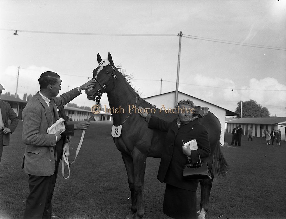 """19/09/1960<br /> 09/19/1960<br /> 19 September 1960<br /> Goffs September Bloodstock Sales at Ballsbridge, Dublin. The Ballsbridge September Yearling Sales opened in Dublin and attracted many international racing personalities. Picture shows Mrs Coates, Ayr, Scotland patting a chestnut yearling colt by """"King's Bench"""" out of """"Hunter's Quay"""", which she bought for 4,000 Guineas at the sales. A.B. Brabazun is on the left."""