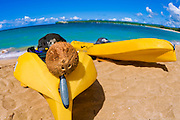 Kayaks and coconut on beach at Hanalei Bay, Island of Kauai, Hawaii USA