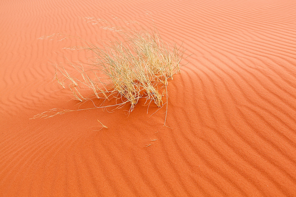 Windswept ripples form around a grass growing from red sand in Wadi Rum, Jordan.