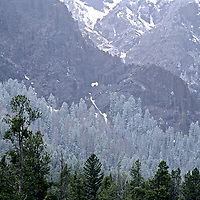 Snow dusts a forest in the Absaroka Mountains, Wyoming.