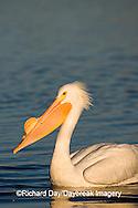 00671-008.05 American White Pelican (Pelecanus erythrorhynchos)  Riverlands Environmental Demonstration Area,  MO