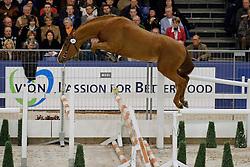 68 - Amant <br /> KWPN Hengstenkeuring - 's Hertogenbosch 2008<br /> Photo © Hippo Foto