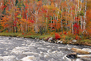 West Branch Ausable River, Adirondacks, NY.  On a gray day a good many years ago, the river was running well in the flats below the gorge, and the colors were peaking.