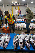 Ono, United Fish Auction, Honolulu, Oahu, Hawaii