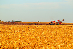 2018 corn and soybean harvest in Central Illinois.  Crops are golden brown and ready for picking in rural McLean County near the towns of Bellflower, LeRoy, Sabina and Glen Avon. Large combines, tractors, wagons and semi-trucks are used and take up a good portion of the narrow roadways.  Dust and debris flies as the crops are cut. Some images in this series have been digitally altered.  <br /> <br /> Some images in this series may not be available for sale or licensing