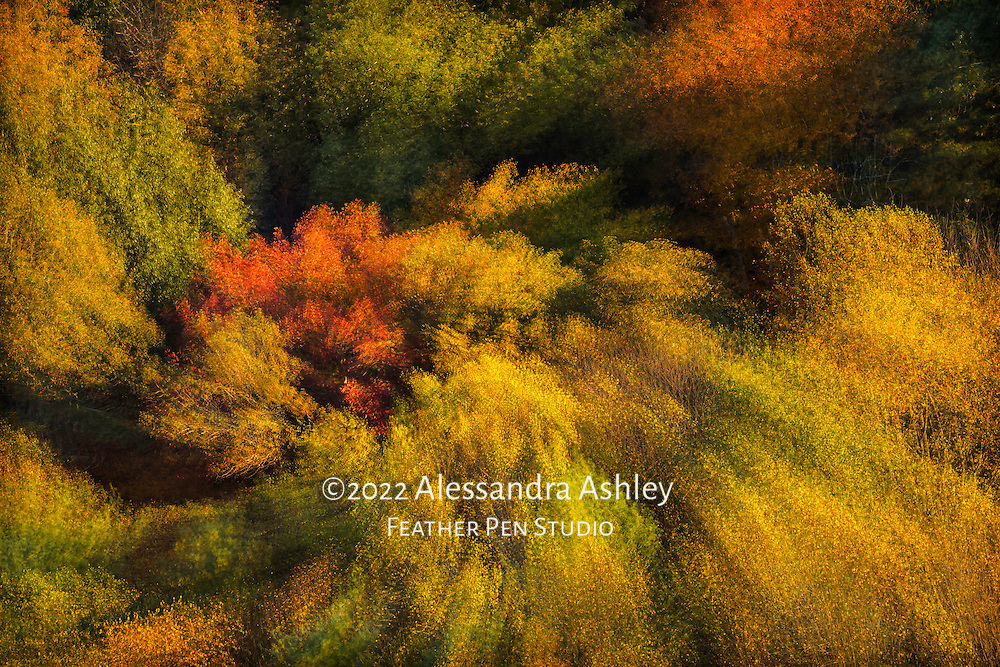 """Foliage of the Mohican Valley as viewed from Mohican State Park Overlook during """"golden hour,""""   with in-camera multiple exposure rotate and zoom (MERZ) technique to acentuate the """"fiesta"""" of color and light."""