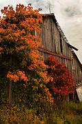Sweet Valley Barn in Autumn