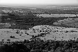 """Castel del Monte - Puglia - Campagna nei pressi di Castel del Monte. La Murgia è una subregione pugliese che si estende per circa 4000 km² nel centro della Puglia centrale. Il nome deriva dalla parola latina """"murex"""", che significa roccia aguzza. La Murgia è un territorio carsico coltivato a olivi (per la produzione di olio d'oliva DOP), vite biologica e numerosi alberi da frutto come mandorli, ciliegi e gelsi."""
