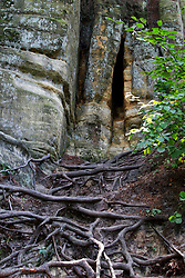 Roots create an eerie set of steps up to a cathedral type opening in a rock formation above.