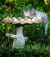 A cat gets some relief from the heat from a bird feeder in Warrington off Lakewood Road.