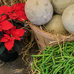 Harrosburg, PA, USA - January 13. 2015: Canteloupes and String Beans in baskets on display at the PA Farm Show.