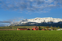 Red Barn Wallowa Valley, near Joseph Oregon, Wallowa Mountains in the background.