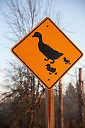A duck-crossing road sign featuring a duck and two ducklings warns motorists to be careful when driving past a small pond near Bothell, Washington.