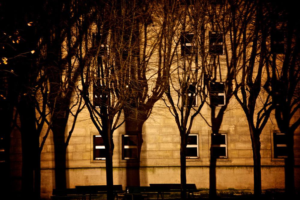 Trees, Shadows, Windows. Paris<br /> Photo by Lorenz Berna