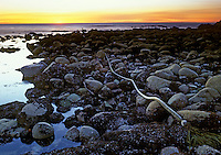 Rocky Shore at Sunset, Great Tidepool, Pacific Grove, CA
