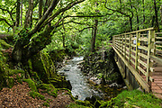 Eskdale Trail, in Lake District National Park. England Coast to Coast hike with Wilderness Travel, day 2 of 14: from Eskdale in Cumbria county, we walked to Boot for lunch at a local pub and a visit to a working medieval corn mill, in the United Kingdom, Europe. We then climbed to Burnmoor Tarn, then descended to the hamlet of Wasdale Head. Via minibus we returned to Irton Hall for the second night. [This image, commissioned by Wilderness Travel, is not available to any other agency providing group travel in the UK, but may otherwise be licensable from Tom Dempsey – please inquire at PhotoSeek.com.]