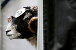 Derby County's Ram Mascot prior to the beginning of the match