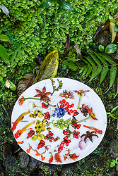 Plate filled with examples of orchids and plants from  premontane cloud forest, Nectandra Cloud Forest Garden, Costa Rica.