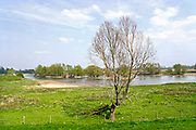 Nederland, Passewaay, 15-4-2019In de uiterwaard van Passewaay bij Tiel is een nevengeul van de Waal uitgegraven. Natuurontwikkelingsgebied Wetland Passewaaij wordt beheerd door staatsbosbeheer.Foto: Flip Franssen