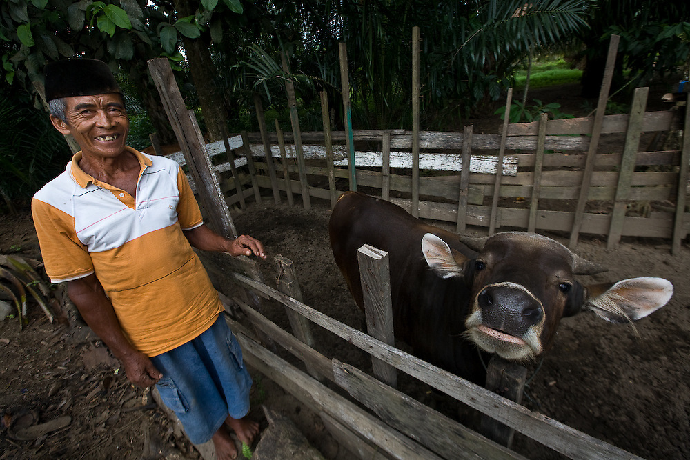 Cotmee Village near Meulaboh - Aceh, Indonesia  Nov. 2008. (Heifer Participant) Kumid with his bull.