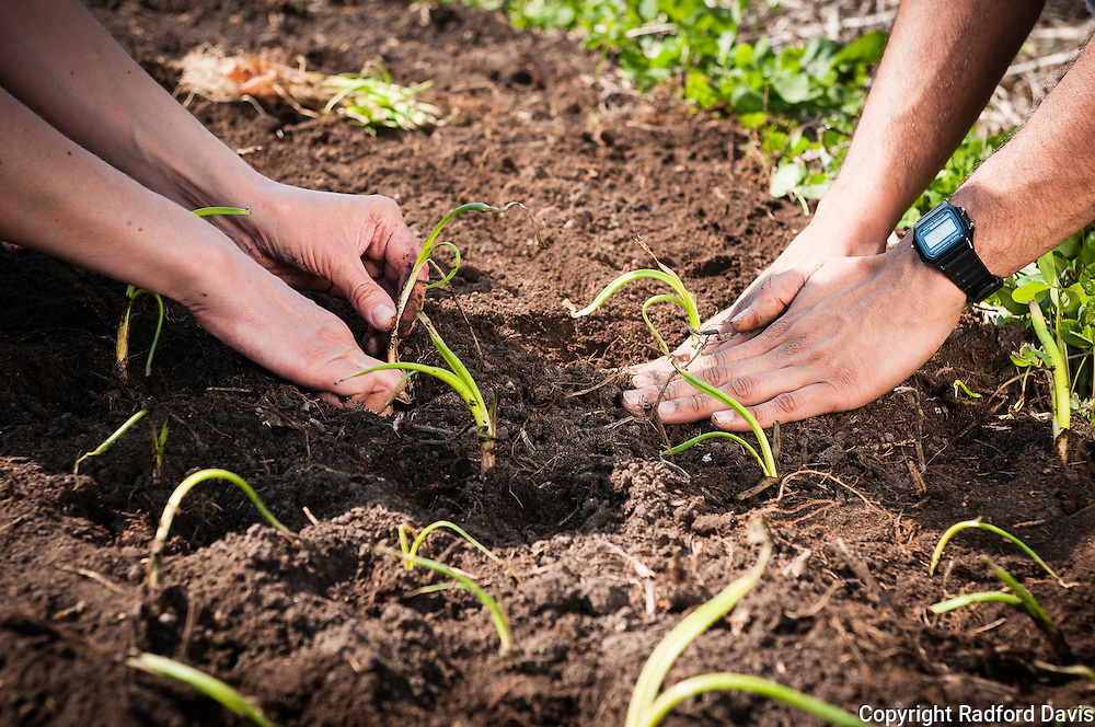 Planting with cooperation and care
