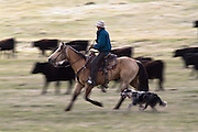 Cowboy on horseback, Montana.