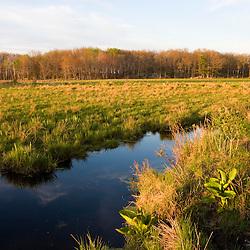 "The wet grasslands of the ""Common Pasture"" in Newburyport, MA."