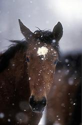 Veulen in sneeuw<br /> Photo © Hippo Foto