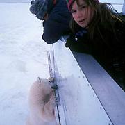 Sylvia Novotny photographs bears with her Dad from a Tundra Buggy?vehicle. Churchill Manitoba. Canada.