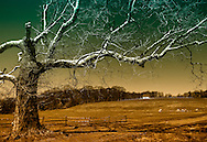 Scene 2 of Misty Hills Farm near New Hope in Solebury Township, Bucks County, Pennsylvania. April, 2014.