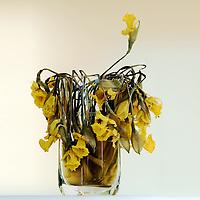 Dried flowers still keep the color, and the structure of the flower is even more visual now. Here is my mother's easter lilies after they dried up. <br /> <br /> Tørkede blomster beholder fargen,og strukturen blir enda mer tydelig. Vasen inneholder påskeliljer som min mor lot tørke.