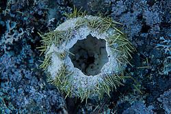 Sea Urchin Shell, Sheep Island, Castine, Maine, US