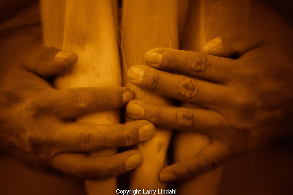 Hopi corn harvest with hands