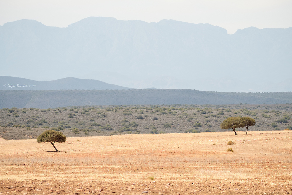 In the heat haze shimmering over this vast South African landscape, isolated trees formed some of the only features that stood out against this minimalist topography
