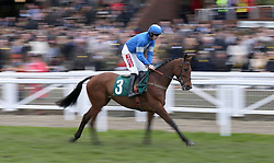 Maria's Benefit ridden by Ciaran Gethings go to post prior to the start of the Trull House Stud Mares' Novices' Hurdle during St Patrick's Thursday of the 2018 Cheltenham Festival at Cheltenham Racecourse. PRESS ASSOCIATION Photo. Picture date: Thursday March 15, 2018. See PA story RACING Cheltenham. Photo credit should read: Steven Paston/PA Wire. RESTRICTIONS: Editorial Use only, commercial use is subject to prior permission from The Jockey Club/Cheltenham Racecourse.