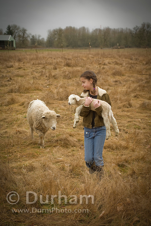10 year old Isabel Durham carries a newborn lamb back to the barn as the mother ewe follows. On a small family farm, Sauvie Island, Oregon. Model and Property released.