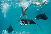snorkeler dives to touch manta ray, Manta alfredi (formerly Manta birostris ), while guide photographs her with her own camera, Hanifaru Bay, Hanifaru Lagoon, Baa Atoll, Maldives ( Indian Ocean )