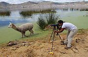 Puno - Friday, Dec 20 2002: Lorna Brooks photographs llamas beside Lake Titicaca.  (Photo by Peter Horrell / http://www.peterhorrell.com)