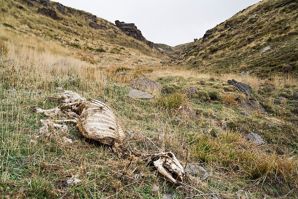 The skeleton of a sheep in the foothills of the Sierra Nevada outside the village of Capileira, Andalusia, Spain.