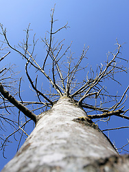 Baum mit blauem Himmel, EXPA Pictures © 2011, PhotoCredit: EXPA/ S. Kiesewetter