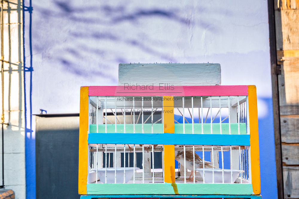 A fortune telling bird sits in a colorful cage at the Sunday antiques market in the Barrio Antiguo or Spanish Quarter neighborhood adjacent to the Macroplaza Grand Plaza in Monterrey, Nuevo Leon, Mexico.