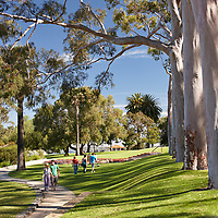 Fraser Avenue and the lawns at Kings Park, Perth