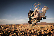 11/11/2014 - Uyuni, Bolivia: Plastic tree #58. Plastic bags are part of the landscape of the Bolivian Altiplano. The accumulation of plastic bags on the environment cause deterioration of the landscapes and agriculture soils and it is associated to the death of domestic and wild animals.