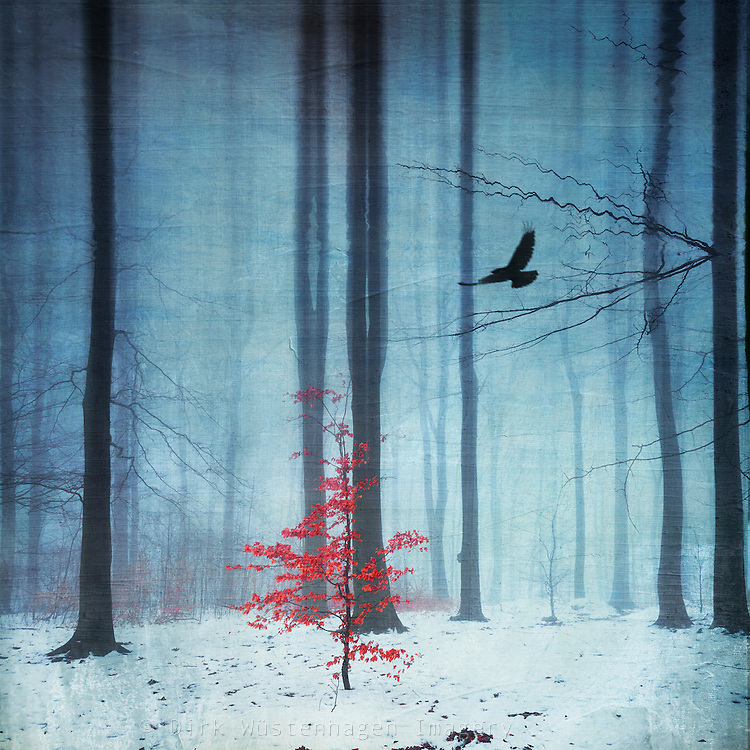 Surreal wintry forest scenery with a small tree with red leaves - manipulated photograph<br /> Licenses:<br /> http://www.trevillion.com/search/preview/snowy-forest-with-bird/0_00205213.html