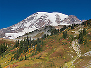 Explore fall foliage colors in Paradise Valley in Mount Rainier National Park, Washington, USA. Skyline Trail is one of the great day hikes of the world. Mount Rainier rises to 14,411 feet elevation.