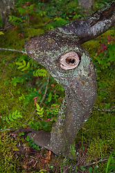 Tree, Stuart Island, San Juan Islands, Washington, US