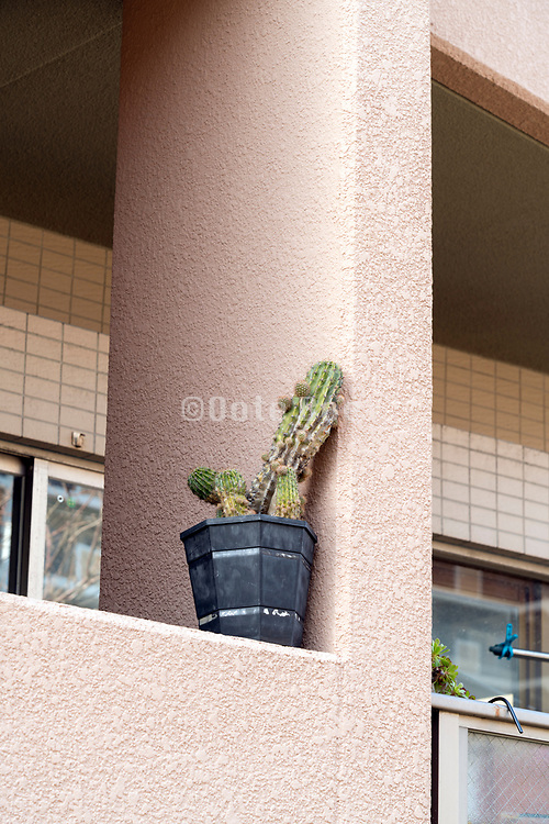 cactus plant on the balcony wall