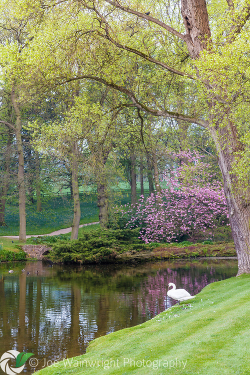 The gardens at Hodnet Hall, Shropshire, photographed in April